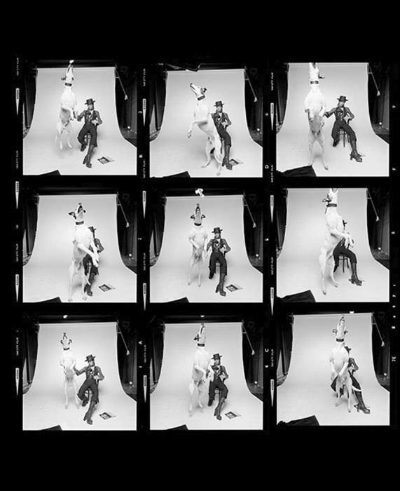 Contact sheet of David Bowie posing for the 1974 Diamond Dogs album cover